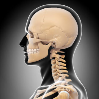Graphic showing bones of the skull and neck representing EndoNasal Cranial Correction™ service offered in our office.